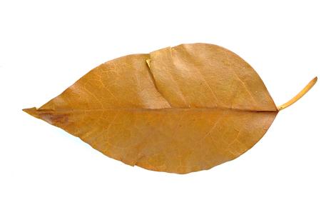 droop: leaf Stock Photo