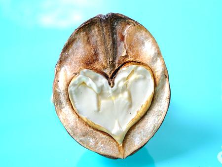 corazon: Walnut in blue background
