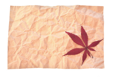 crinkle: Red maple in crinkle paper Stock Photo