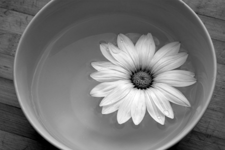 Flower in a bowl of water