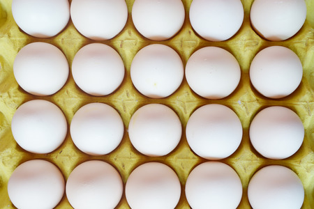 packed: packed egg