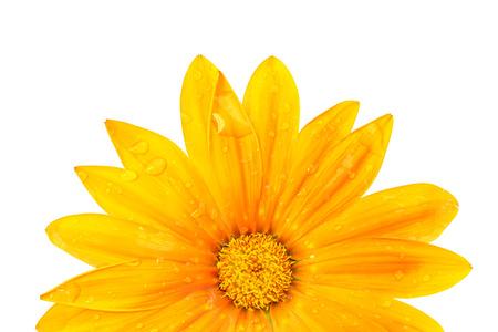 favorite colour: Beautiful colorful chrysanthemum Stock Photo