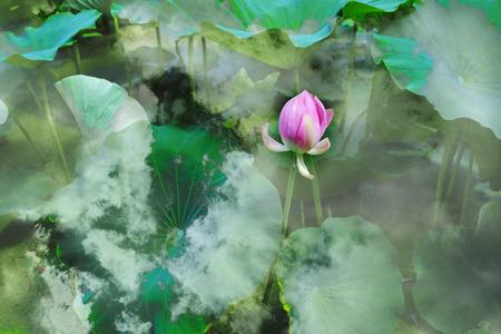 hydrophyte: Lotus flowe
