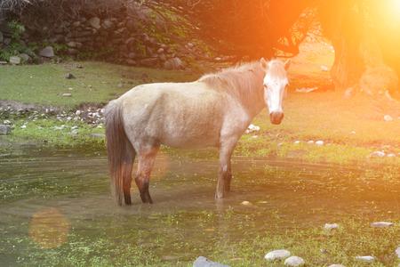 在草原的白馬