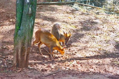 鹿關閉視圖
