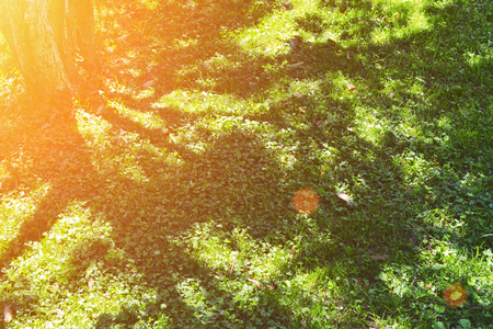 Morning sunshine and grass texture
