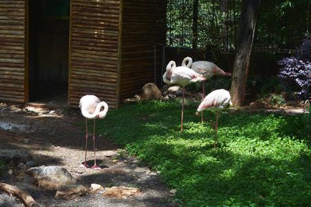 火烈鳥在動物園