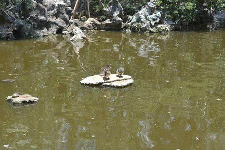 鴨子在湖上