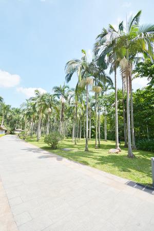 tropical garden: way between palms Stock Photo