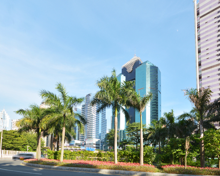 futian: coconut and office buildings in Futian district ,shenzhen city ,china