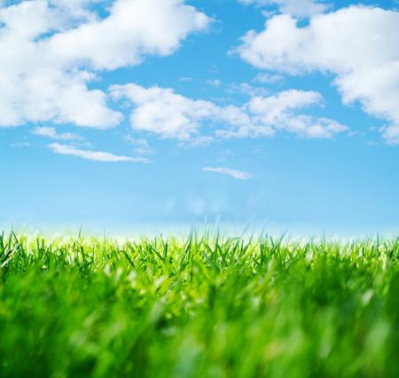 La naturaleza de fondo abstracto con la hierba Foto de archivo - 48446278