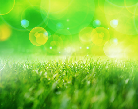 luz natural: Spring grass in sun light and defocused green background. Blurred green natural background. Foto de archivo