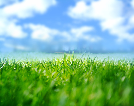 nature abstraite: abstract nature background with grass