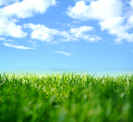 blue sky: abstract nature background with grass