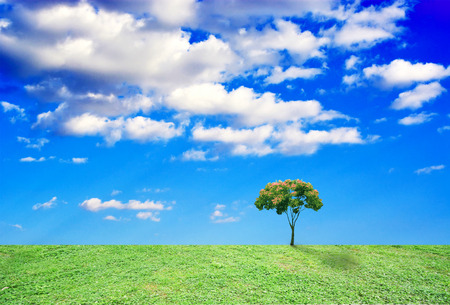 l agriculture: tree grow alone on the grassland