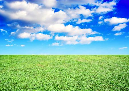 grassland: grassland