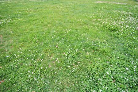 herbe terre