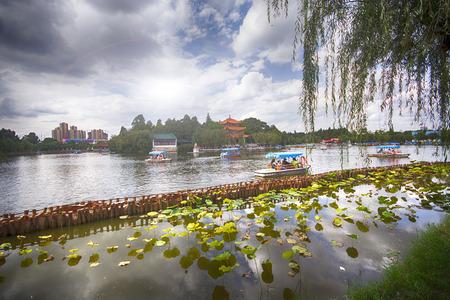 蓮花和觀光船