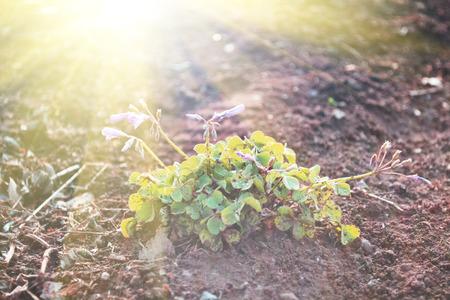 陽光照耀在地上