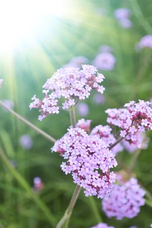 關閉微小的花朵的看法