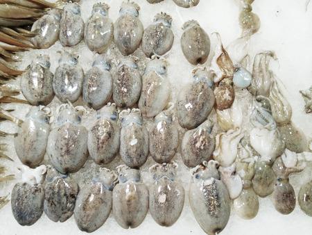 Fresh squids 版權商用圖片 - 74759276
