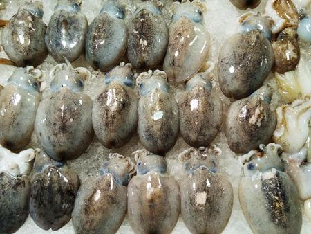 鮮魷魚 版權商用圖片 - 74759277