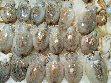 Fresh squids 版權商用圖片