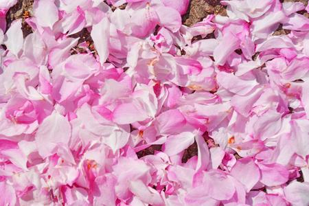 cherry petal close up view