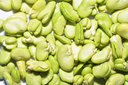 Broad bean 版權商用圖片