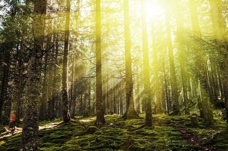 Autumn dawn in forest 版權商用圖片 - 74696346