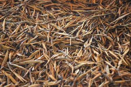 Yunnan golden tea