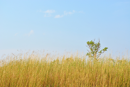 reed and tree