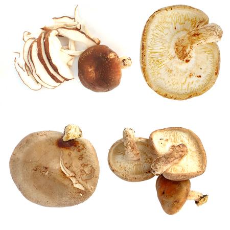 fresh champignon mushrooms isolated on white Stock Photo