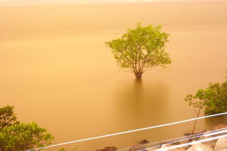 mangroves: Mangroves on sea Stock Photo