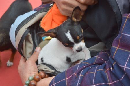Man holding Chihuahua dog