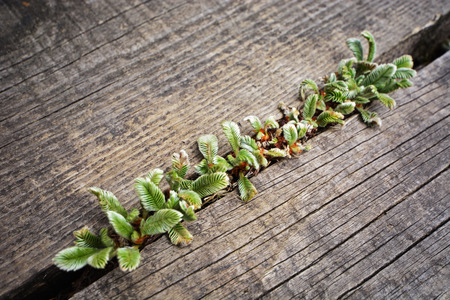 Tenacious plant growth