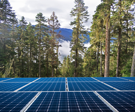 Solar panels and forests