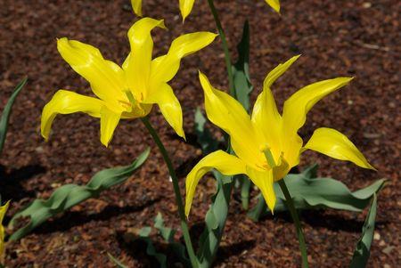 yellow flower Фото со стока