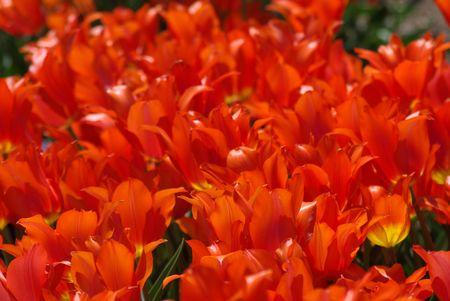 red flowers 版權商用圖片 - 888844