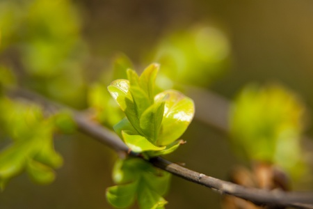 Budding plant in Spring photo