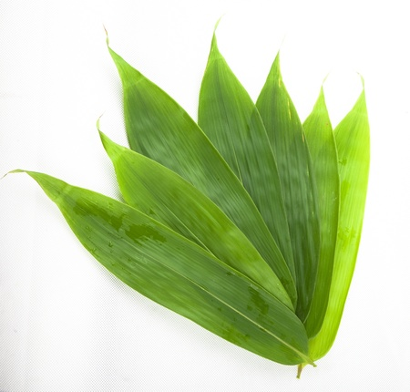 Bamboo leaves for rice dumpling studio shoot with white background