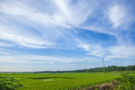ricefield under blue sky photo