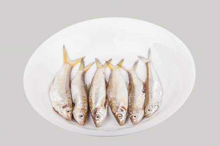 light water fish in the dish studio shoot Stock Photo - 15379834