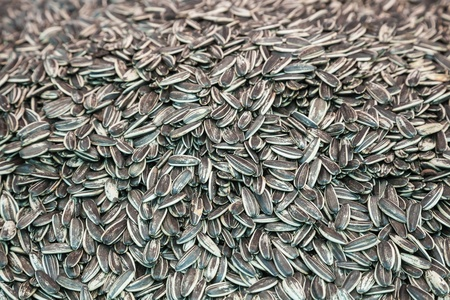 sunflower seed: Close up of sunflower seed Stock Photo