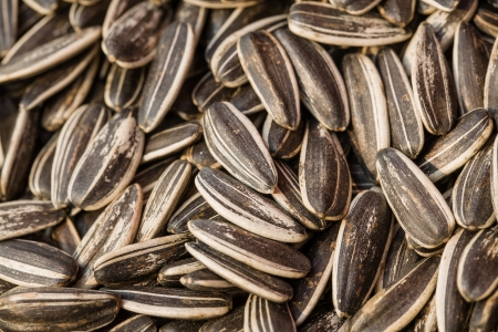 sunflower seed as background Stock Photo - 15358483