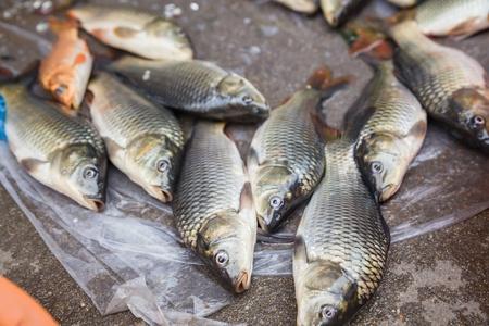 grass carp: Grass carp on the market place. Stock Photo