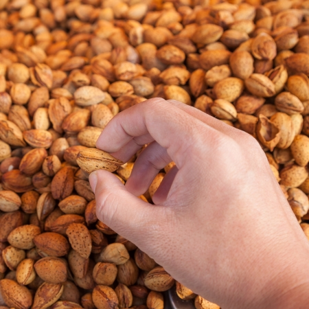 hand hold sugar roasted almond  photo