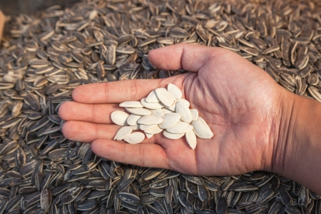 sugar roasted pumpkin seed in hand with sunflower seed as background Stock Photo - 16261483