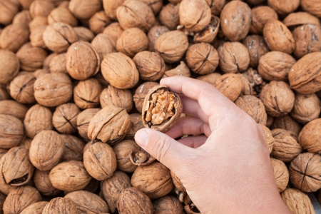 walnut hold by hand Stock Photo - 16487751