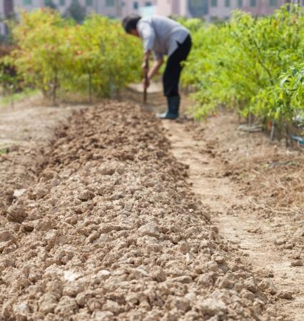 farmer hoeing in the garden photo